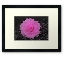 A Touch Of Pink Framed Print