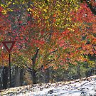 Yield to Autumn by Kelly Chiara