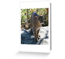 Cougar Grandfather Mountain Greeting Card