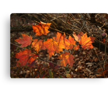 The Transparency of Fall Canvas Print