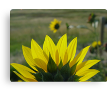 MONTANA SUNFLOWER ON THE HALFSHELL Canvas Print