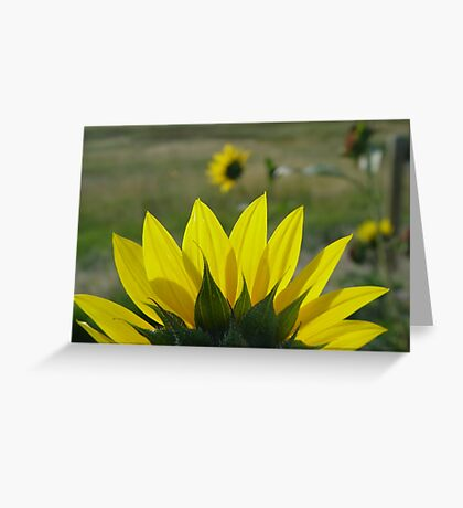 MONTANA SUNFLOWER ON THE HALFSHELL Greeting Card