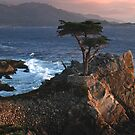 Lone Cypress at Sunset by rrushton