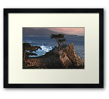 Lone Cypress at Sunset Framed Print