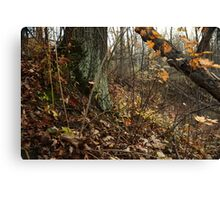 A Sloping Forest Scene Canvas Print
