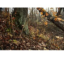 A Sloping Forest Scene Photographic Print