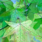 Green Canopy by Patsy L Smiles