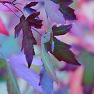 Rainbow Leaves by Patsy L Smiles
