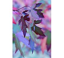 Rainbow Leaves Photographic Print