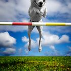 Zelda, RHOA, RHEXAJ: From Rescued Dog To Agility Champion by Alex Preiss