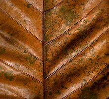 Dried  Leaf by lightmonger
