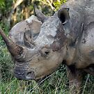 Now That Is A HORN ! by Michael  Moss
