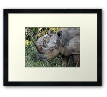 Now That Is A HORN ! Framed Print