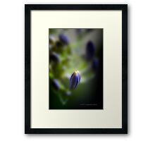 Simplicity © Vicki Ferrari Framed Print