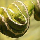 Green Ribbon by Tracey Hampton