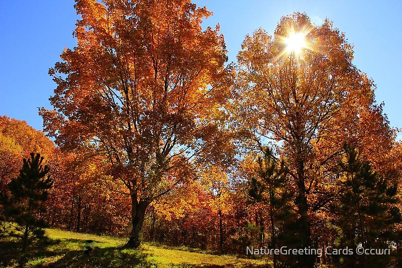 Falling  Star   by NatureGreeting Cards ©ccwri