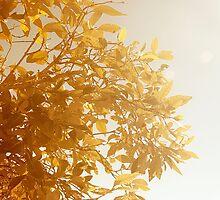 Sunshine On A Rainy Day by Carol Knudsen