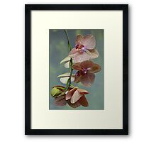Blooming Orchids and Buds Framed Print