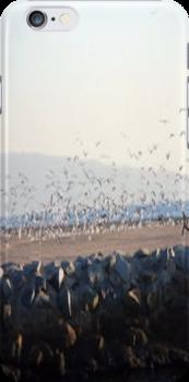 The Birds... by Photos55