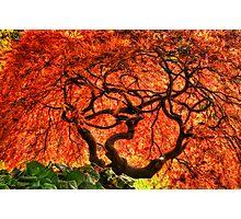 Maple Matrix Photographic Print