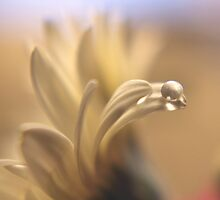 Waterbead by strgaZeNn
