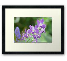 Light Purple Orchids Framed Print