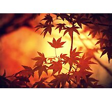 A constantly changing tree Photographic Print