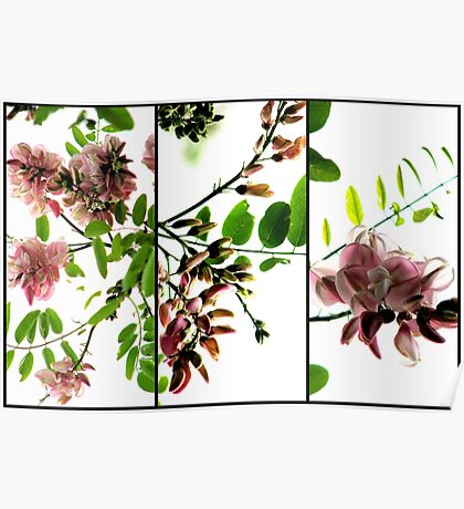Robinia - Triptych Poster