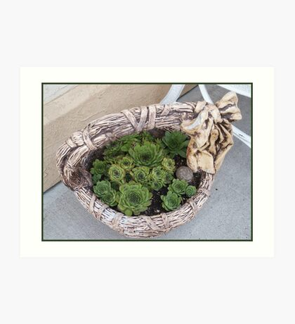 Basket Of Hens And Chicks Art Print