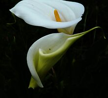 """Consider the Lillies..."" by Meg Hart"