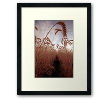 Wheat Tunnel Framed Print