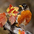 Fall Robin by Debbie  Fontaine