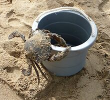 Crab v's bucket by jazzyd