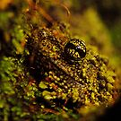 Mossy Frog by Robin Black