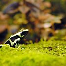Frogs by Robin Black