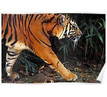 Tiger Tracks Poster