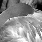 Flamingo 3 (B&W) by Robin Lee