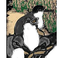 Fairy Penguin Parade Photographic Print