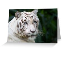 Rare White Tiger Greeting Card