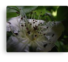 macro spring blossums at Plenty Canvas Print