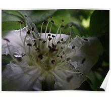 macro spring blossums at Plenty Poster