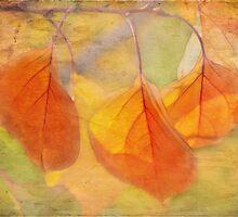 autumn glory by Teresa Pople
