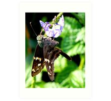 Longtailed Skipper Art Print