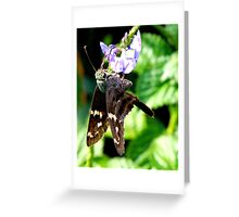 Longtailed Skipper Greeting Card
