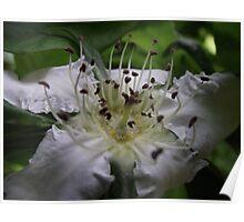 spring macro flower blossoms Poster