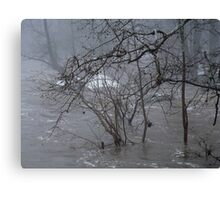 Gumballs Above the Winter Flood Canvas Print