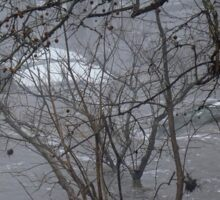Gumballs Above the Winter Flood Sticker