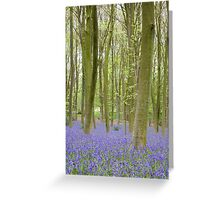 Bluebell Woods, Micheldever Forest Greeting Card
