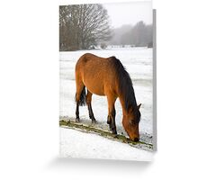 New Forest pony in snow Greeting Card
