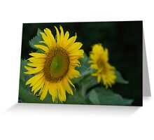 Sunflower Blooming Greeting Card